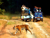 safari en Jeep jim parc corbett