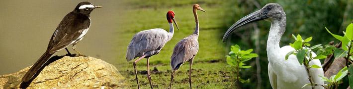 Sanctuaire Des Oiseaux De Bharatpur 7 Jours Rajasthan