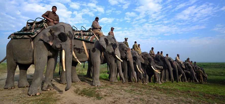 Safari Parc National De Kaziranga Assam Gets Holidays