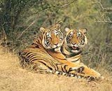 Ranthambore Parc national